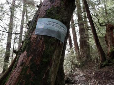 IMG_0992_9_treetrail