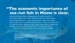 """""""The economic importance of sea-run fish in Maine is clear. Maine scientists have linked the disappearance of coastal cod stocks to the dramatic decline in the number of alewives compared to historic levels. Alewives spend their lives at sea but swim up rivers to spawn in the spring.Large numbers of cod used to follow these fish close to shore, where they could be caught more easily, supplying the Maine fishing industry with a lucrative catch. Alewives are also the preferred spring bait for Maine's lobster industry. They are particularly important now because of herring shortages."""" — Nick Bennett Staff Scientist for the Natural Resources Council of Maine (NRCM) NRCM Testimony in Support of LD 922, """"An Act Directing the Commissioner of Marine Resources To Investigate the Conditions of Sheepscot Pond Related to a Management Plan for Anadromous Fish."""" https://www.nrcm.org/environmental-testimony/in-support-ld-922/, March 22, 2017. Drawing of Alewife provided courtesy of the Maine Department of Marine Resources Recreational Fisheries program and the Maine Outdoor Heritage Fund. Map: USGS Streamer, retrieved, January 2018. WordWrap 2018: Swimming Upstream, by Lisa Link for Waterville Creates!"""