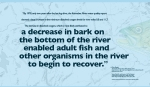 """""""By 1978, only two years after the last log drive, the Kennebec River water quality report showed a large increase in the minimum dissolved oxygen levels for river miles 0.0 and 11.7. The increase in dissolved oxygen, which is most likely attributed to a decrease in bark on the bottom of the river enabled adult fish and other organisms in the river to begin to recover."""" —Elise Begin The Kennebec River: A Historic Maine Resource, 2012. Digital Commons @ Colby, https://digitalcommons.colby.edu/heane/5/ Retrieved January, 2018. Drawing of Striped Bass provided courtesy of the Maine Department of Marine Resources Recreational Fisheries program and the Maine Outdoor Heritage Fund. Map: USGS Streamer, retrieved, January 2018. WordWrap 2018: Swimming Upstream, by Lisa Link for Waterville Creates!"""