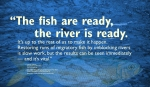 """""""The fish are ready, the river is ready. It's up to the rest of us to make it happen. Restoring runs of migratory fish by unblocking rivers is slow work, but the results can be seen immediately — and it's vital."""" — Landis Hudson Executive Director Maine Rivers http://mainerivers.org/ Drawing of Blueback Herring provided courtesy of the Maine Department of Marine Resources Recreational Fisheries program and the Maine Outdoor Heritage Fund. WordWrap 2018: Swimming Upstream, by Lisa Link for Waterville Creates!"""
